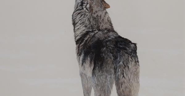 "Link to Work of the Week: ""Song of the Wolf"" by Jeannette Northey"